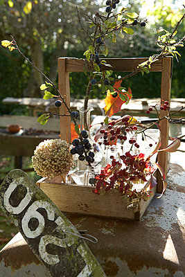 Autumn berries and leaves in wooden crate with numberplate;  Isle of Wight;  UK - p349m920021 by Rachel Whiting