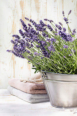 Lavendel - p4641848 von Elektrons 08