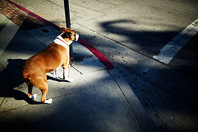 Hund an Kreuzung - p584m1026240 von ballyscanlon