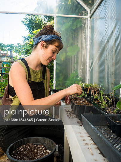 Woman sowing seeds in pot at greenhouse - p1166m1541845 by Cavan Social