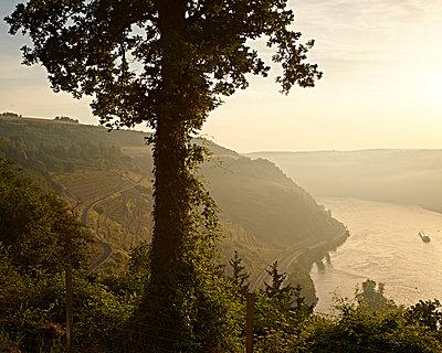 Sonnenaufgang am Rhein - p1124m904612 von Willing-Holtz