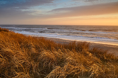 Denmark, Beach - p1686m2288562 by Marius Gebhardt
