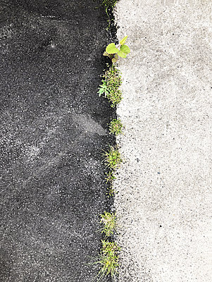 Grass grows in the asphalt - p237m2192862 by Thordis Rüggeberg