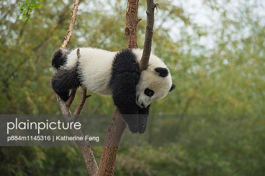 p884m1145316 von Katherine Feng
