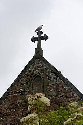Möwe sitz auf dem Dach einer Kirche - p260m758356 von Frank Dan Hofacker