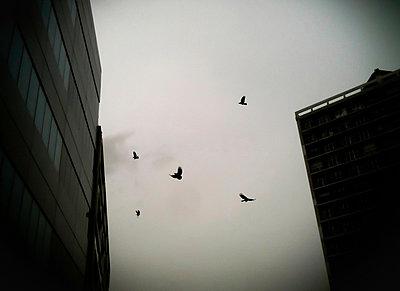 Vögel - p558m881814 von A.da Cunha