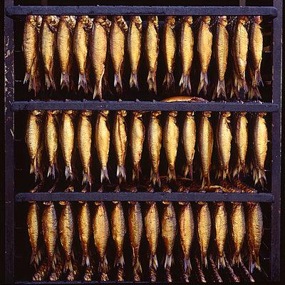 Frisch geräucherte Fische im Räucherofen - p1258m1146239 von Peter Hamel