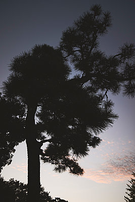 Silhouetted tree against sky at dusk - p301m2213593 by Michael Mann