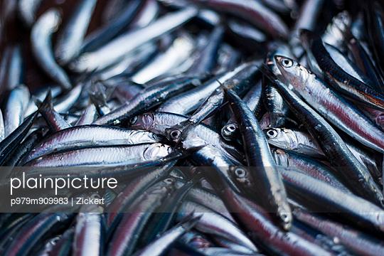 Catch - p979m909983 by Zickert