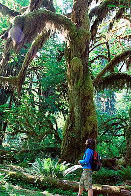 Hoh Rainforest - p0170101 von Kathrin Stange