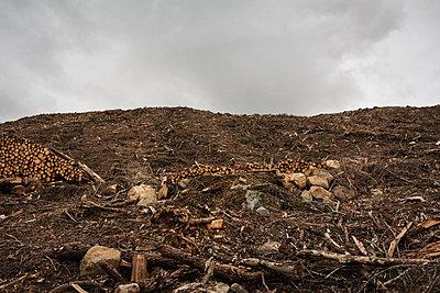 Forestry - p1477m2038951 by rainandsalt