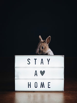 "Rabbit behind light box with message ""Stay at home"" - p1522m2168626 by Almag"