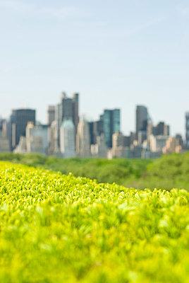 Skyline from Central Park, New York City - p5690027 by Jeff Spielman