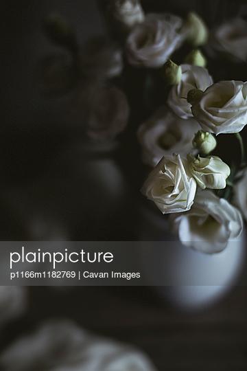 p1166m1182769 von Cavan Images