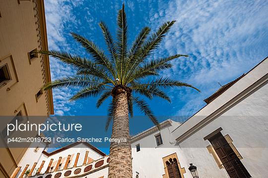 p442m2019723 von Carlos Sanchez Pereyra