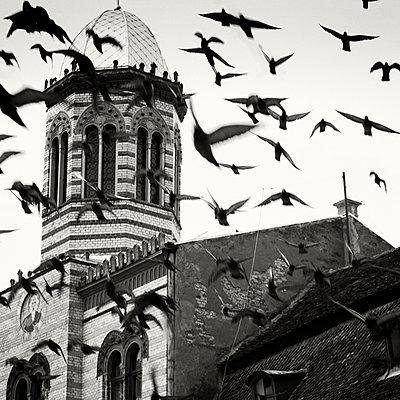 The Flock, Brașov, Romania - p1154m948112 by Tom Hogan