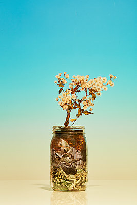 Banknotes and flower in a preserving jar - p1673m2263479 by Jesse Untracht-Oakner