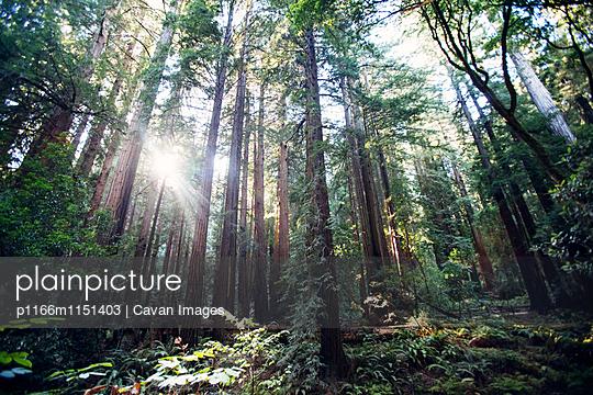 p1166m1151403 von Cavan Images