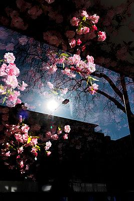 Blüten hinter Fensterscheibe - p1340m1558998 von Christoph Lodewick