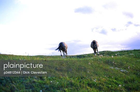 p34812344 von Dick Clevestam
