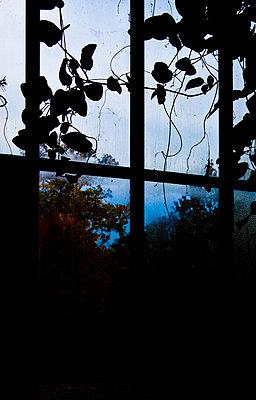 Gewächshaus  - p1330m1492279 von Caterina Rancho