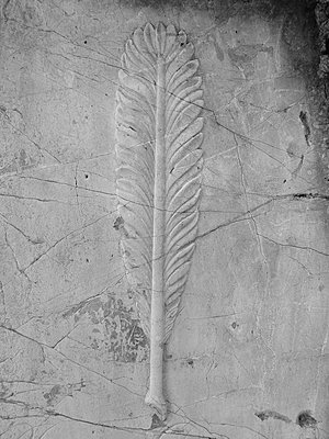 Feather on gravestone - p444m1041364 by Müggenburg