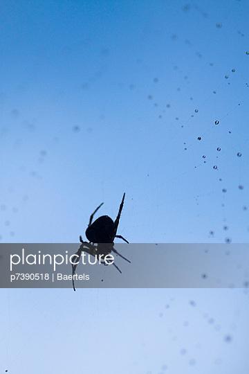 Spinne - p7390518 von Baertels