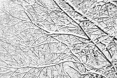 Schneebedeckter Baum - p816m1032168 von Elvegård, Stig Børre