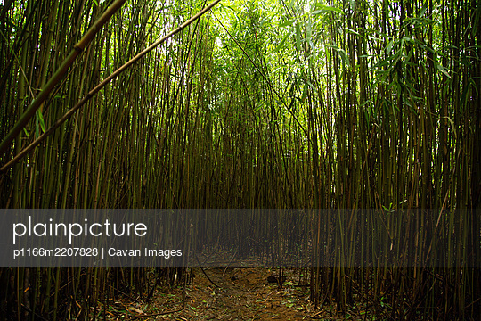 Clearing in Green Bamboo Forest in Maui - p1166m2207828 by Cavan Images