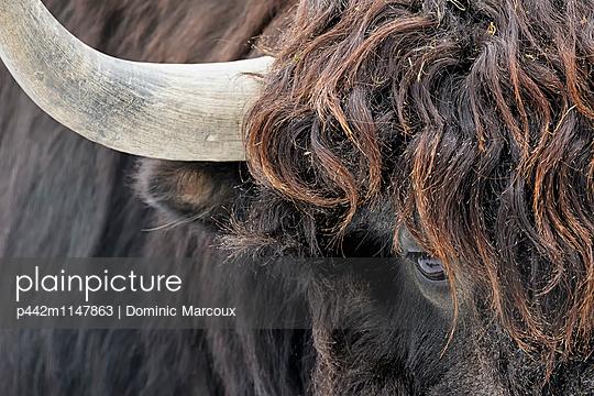 p442m1147863 von Dominic Marcoux
