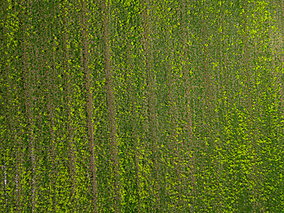 Green fields, drone photography - p1108m2193227 by trubavin