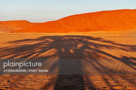 Schatten eines Baumes in der Wüste, Sossusvlei, Namibia, Afrika - p1065m982658 von KNSY Bande