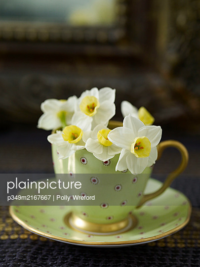 Daffodils in vintage teacup - p349m2167667 by Polly Wreford