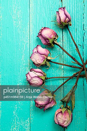 Getrocknete Rosen - p451m984159 von Anja Weber-Decker