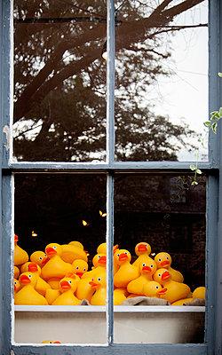 Gummienten in einem Fenster - p1248m1491868 von miguel sobreira