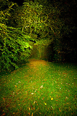 Edge of a forest at night - p248m853946 by BY
