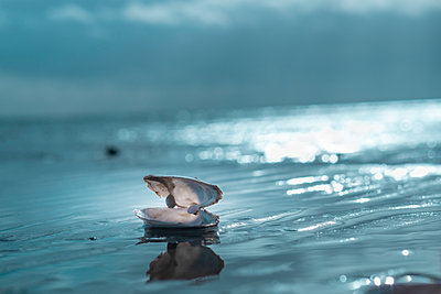 Shell on the beach - p299m2072862 by Silke Heyer
