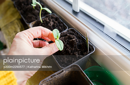 Woman holding seedling at home - p300m2290577 by Katharina Mikhrin