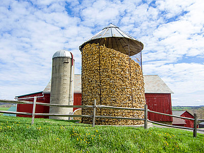 Amish corn, Ohio - p1120m925650 by Siebe Swart