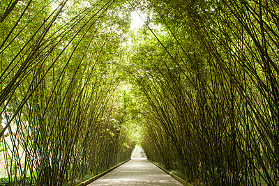Pathway arched by tall green bamboos, Wang jiang lou park, Chengdu, Sichuan, China - p429m1227209 by Fang Zhou
