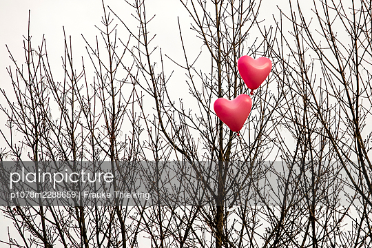 Hearts in a tree - p1078m2288659 by Frauke Thielking