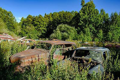 Autowracks in einem Wald in Schweden - p1463m2292937 von Wolfgang Simlinger