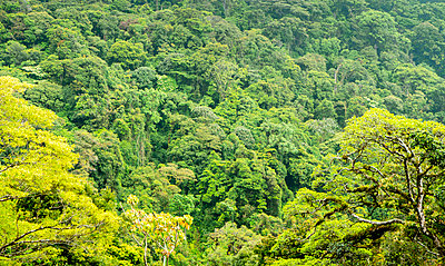 The canopy of the cloud forest at Monteverde, Costa Rica - p1166m2095348 by Cavan Images