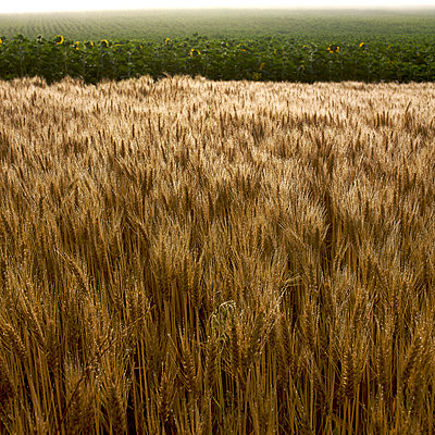 Fields in summer - p8130165 by B.Jaubert