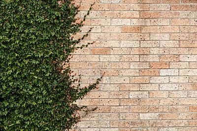 New Zealand; Ngatea; facade greening; partial view - p300m919917 by Valentin Weinhäupl