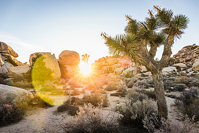 Rock formations at sunset in Joshua Tree National Park at dusk, California, USA - p429m1448125 by Manuel Sulzer