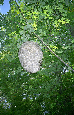 Beehive - p567m720923 by Jesse Untracht-Oakner
