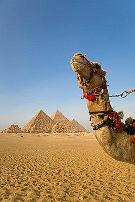 Cairo - p6520289 by Julian Love
