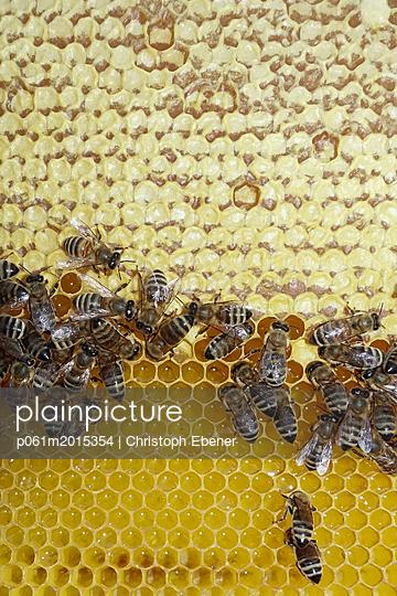 Bienen auf Honigwabe - p061m2015354 von Christoph Ebener