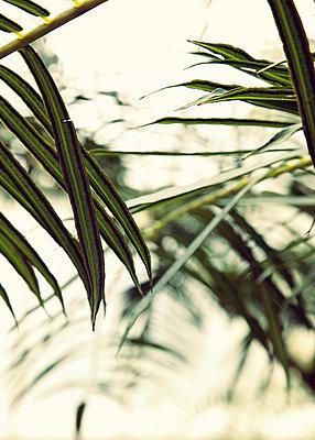 Palm - p382m919594 by Anna Matzen